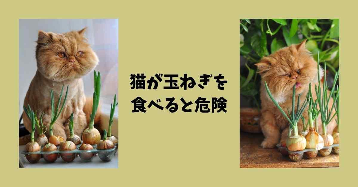 猫 玉ねぎ