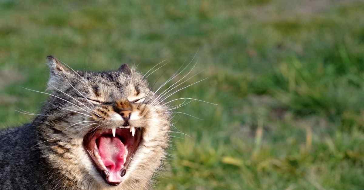 猫の発情期 うるさい