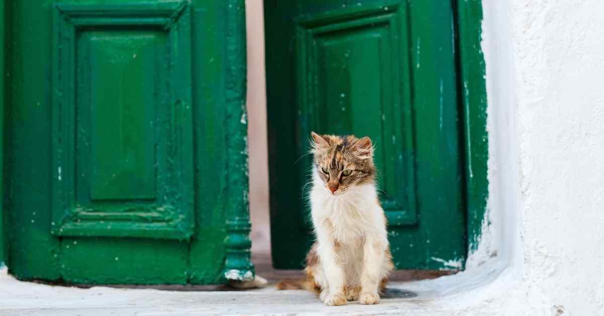 猫 外飼い