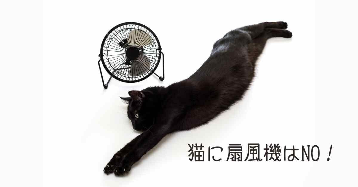 猫 扇風機