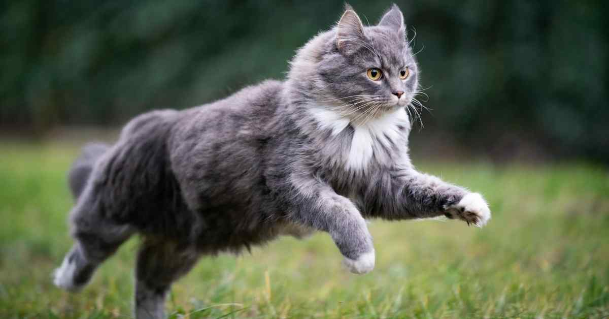 猫 脱走 (1)