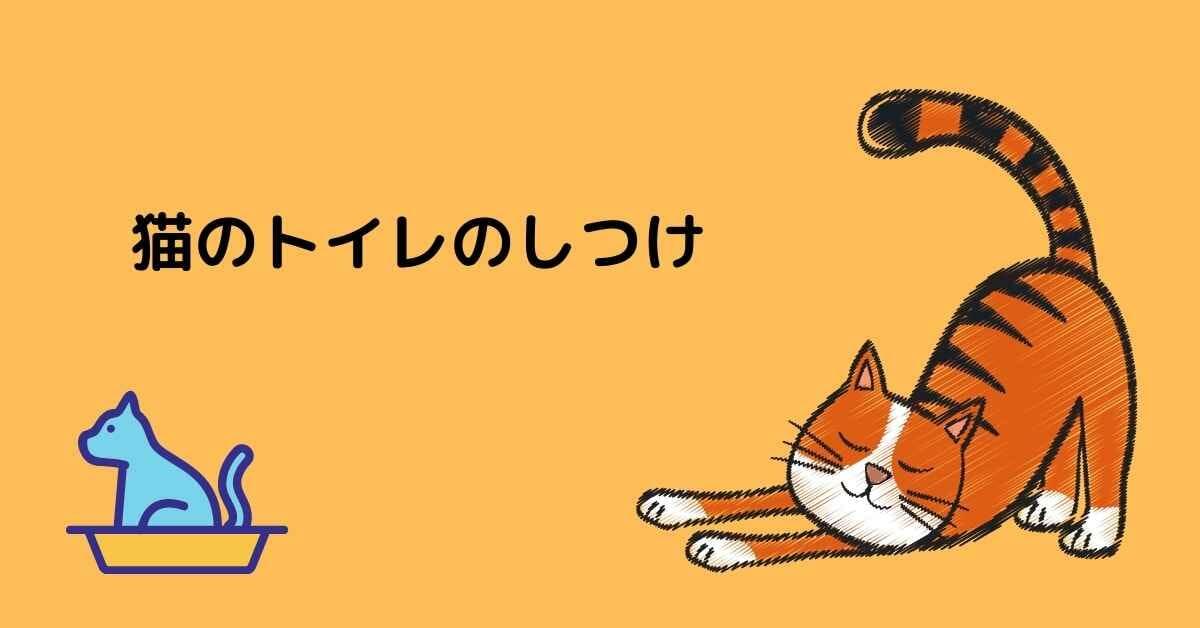 猫のトイレのしつけ (2)