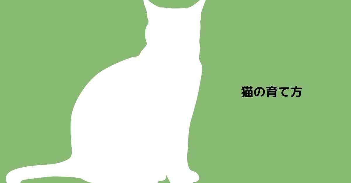 猫 育て方 (1)