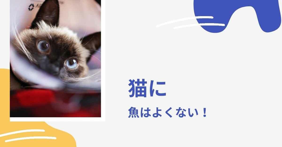 猫 魚 (1)