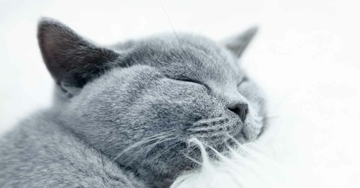 猫 ロイヤルカナン