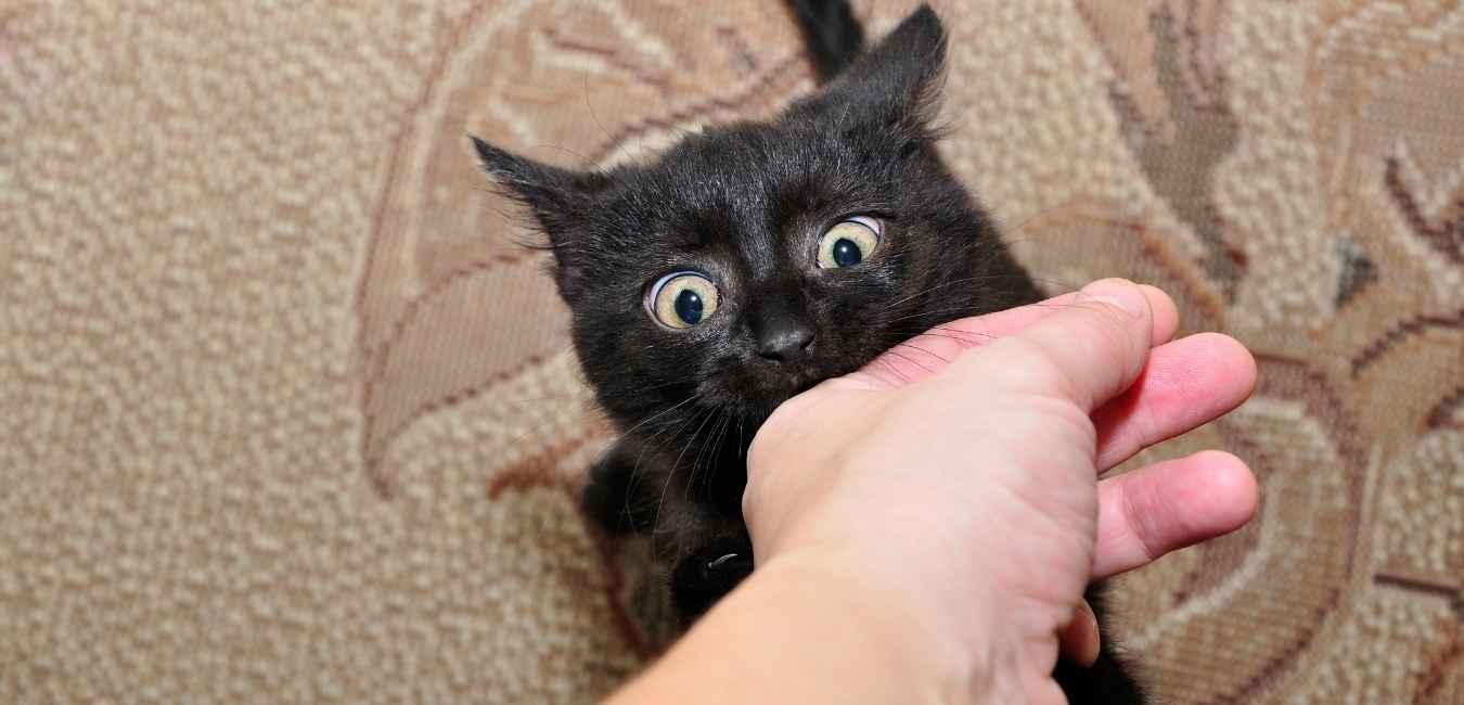 猫が噛む (1)