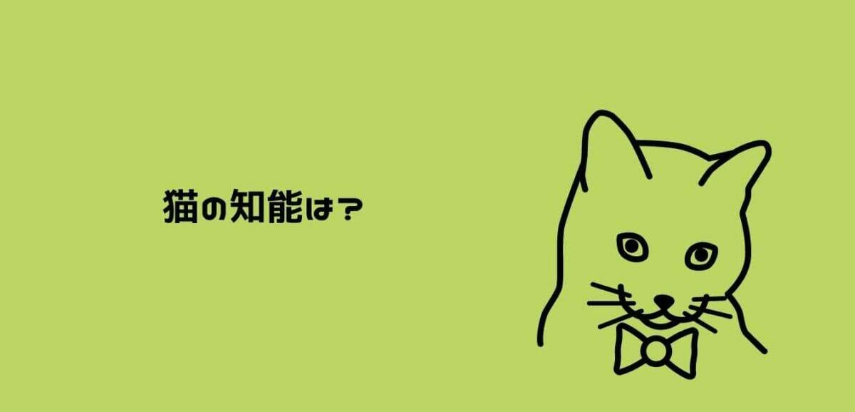 猫の知能は?