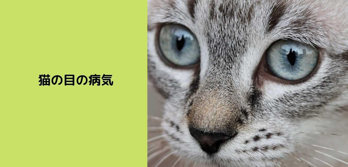 猫 目 (2)