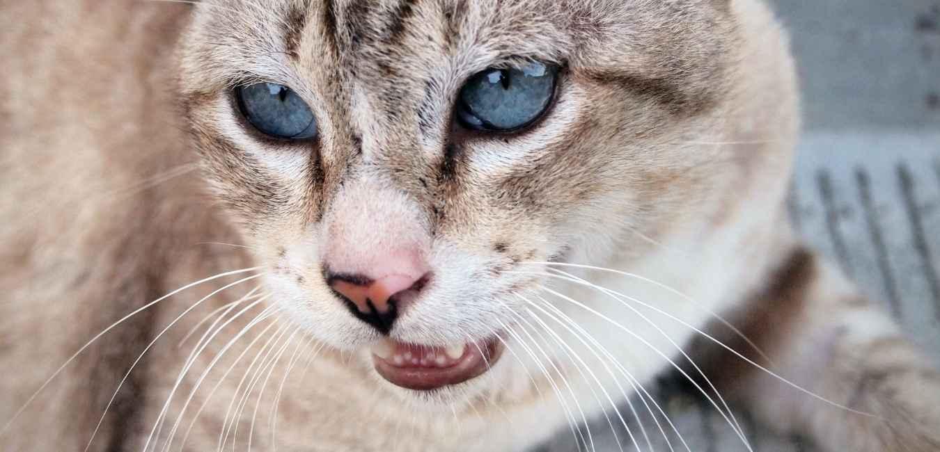 猫 フレーメン