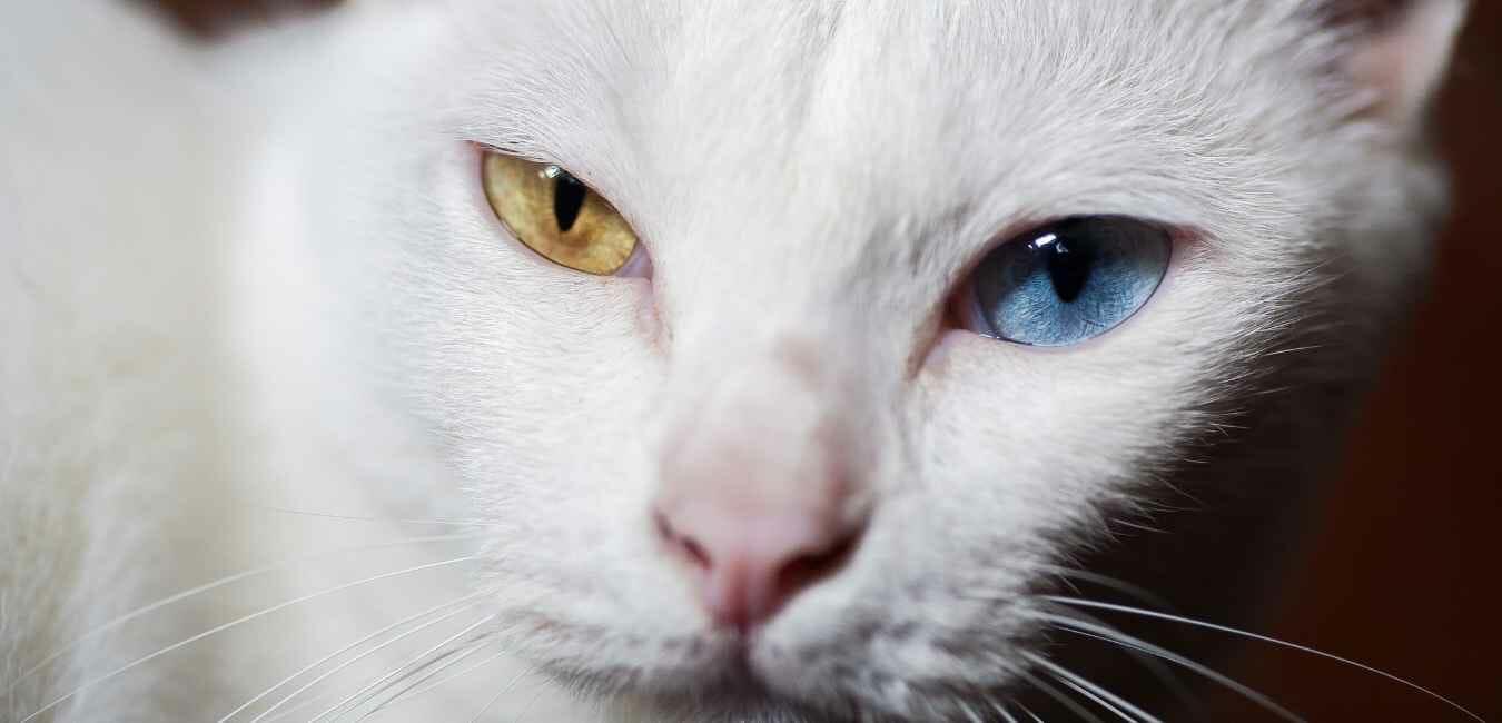 猫 目 (1)