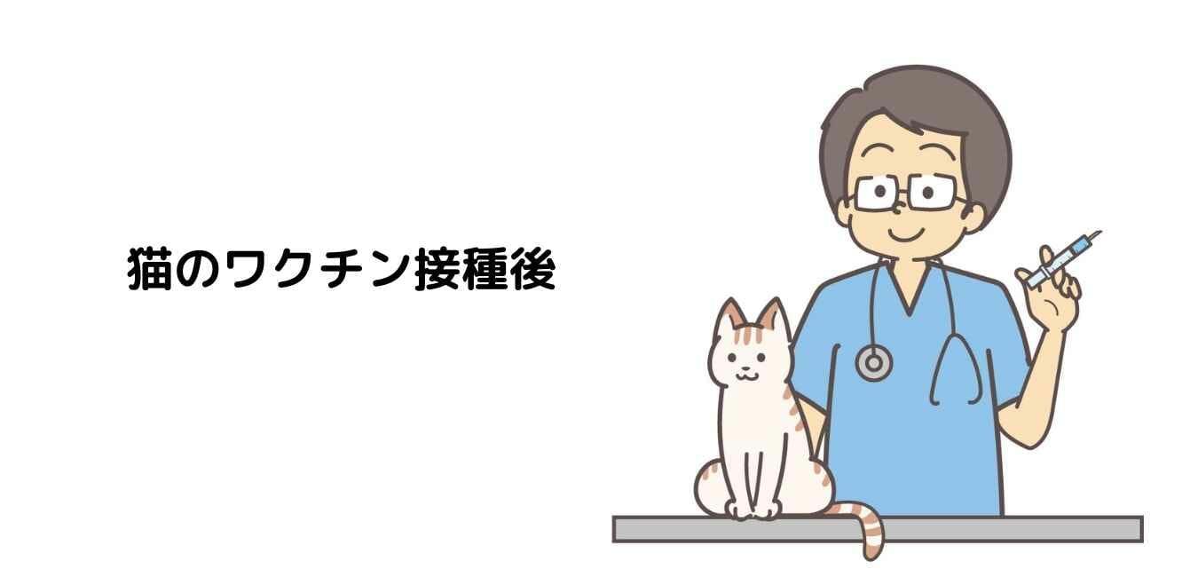 猫のワクチン接種後