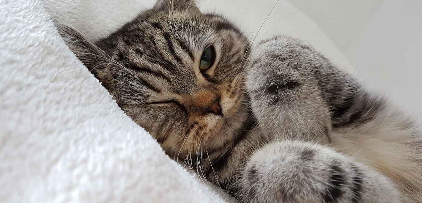 猫が元気ない