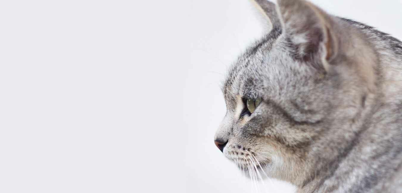 猫 クシャミ