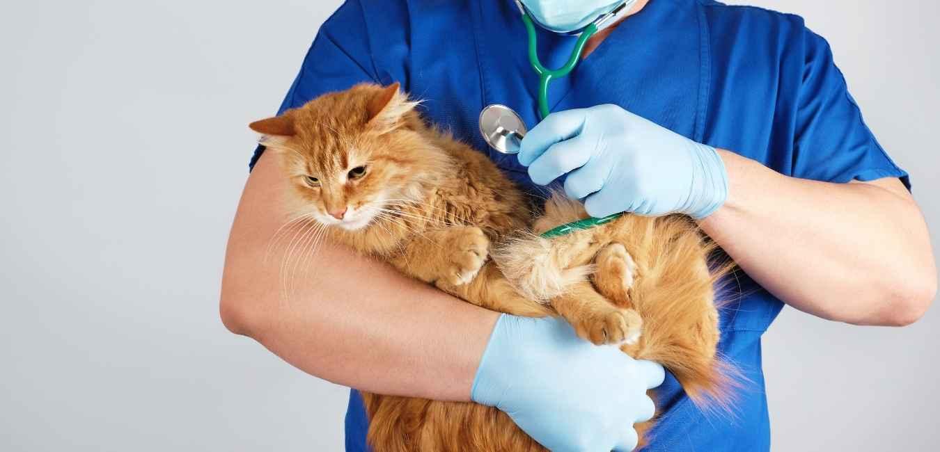 猫 腎臓病