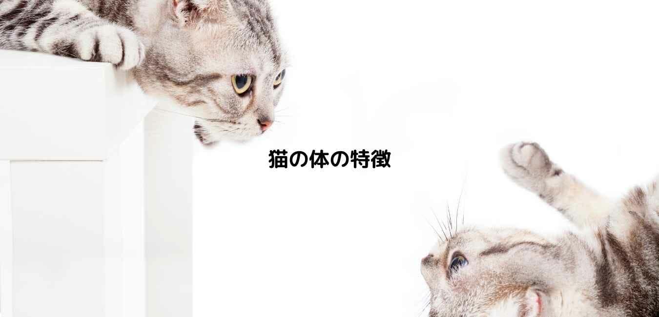 猫の体の特徴
