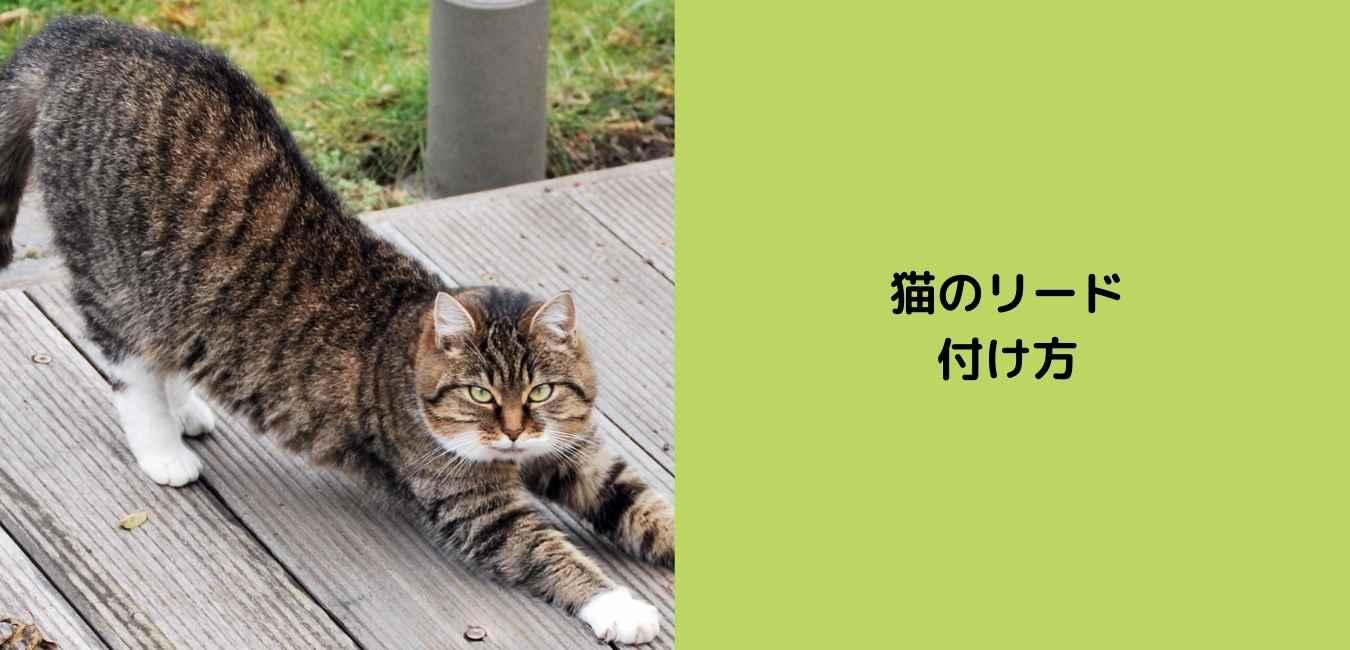 猫 リード